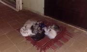прошу помощи в поиске хозяев 7 котят и кошка