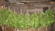 Веники березовые для бани.